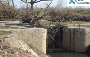 Article Fluvial